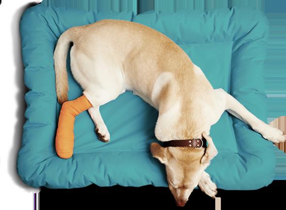 //www.centrovetalverca.com/wp-content/uploads/2017/12/dog-sleep.png